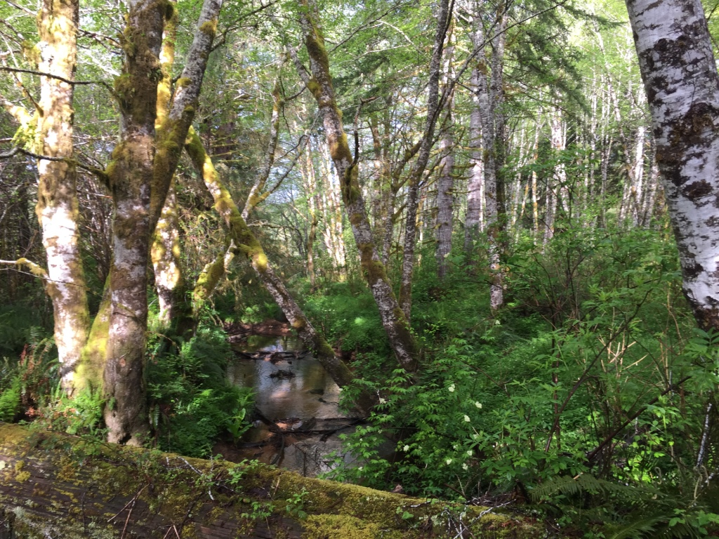 forest of Oregon