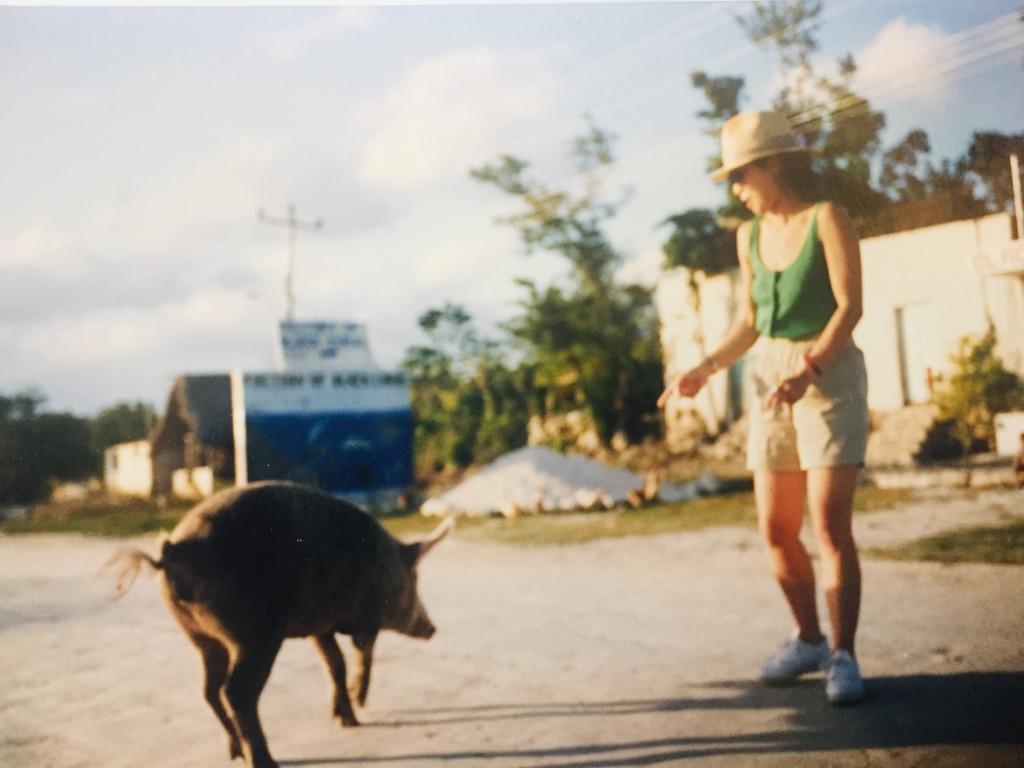 a pig on street