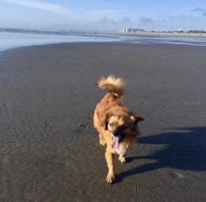 Bugoo on the beach