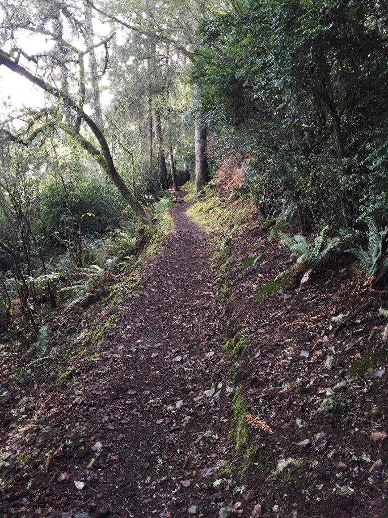Walking trail by the lake